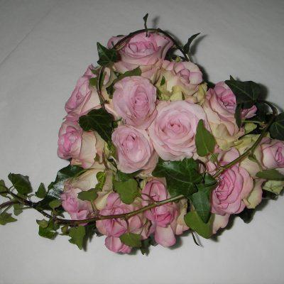Herkkä ruususydän